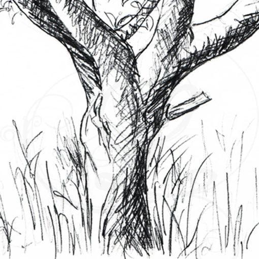 dessins-lucidaelle-flaraison-du-cerisier-04