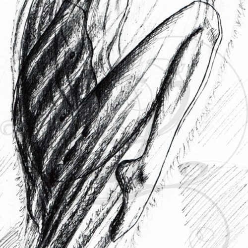 dessins-lucidaelle-bourgeon-en-formation_03