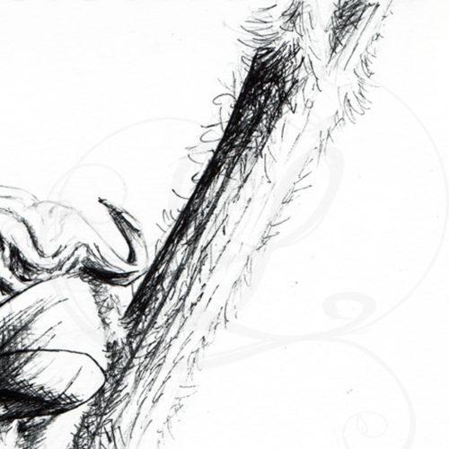 dessins-lucidaelle-bourgeon-en-formation_05