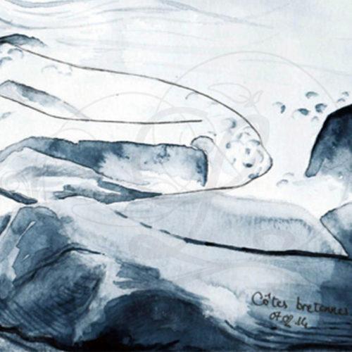 dessins-lucidaelle-cotes-bretonnes-04