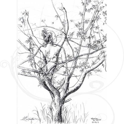 dessins-lucidaelle-flaraison-du-cerisier-02